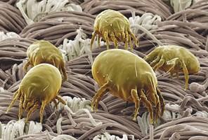 Alergia? Częste infekcje? Zły sen? Usuń przyczynę. Żyj zdrowo!